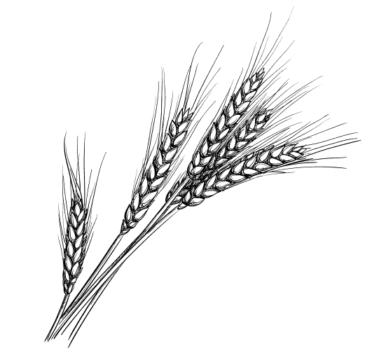 Weizen-Sketch-full